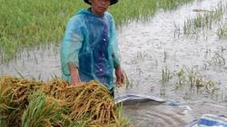 Mưa cực lớn trút xuống miền Trung, nông dân đội mưa ra đồng gặt lúa