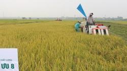 Trồng lúa lãi cao nhờ sử dụng phân bón NPK Lâm Thao khép kín