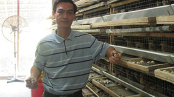 Ăn chắc hơn 100 triệu đồng/năm từ loài chim be bé mà đẻ khỏe