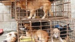 Bắt 2 đối tượng trộm hơn 1 tạ chó trong một đêm