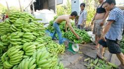 Đang từ lãi cao, giá chuối Đồng Nai lao dốc có loại còn 1.000 đ/kg