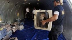 Ly kỳ vụ việc cả máy bay phải hạ cánh vì một... chú chó nhỏ
