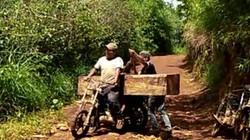 UBND tỉnh Gia Lai chỉ đạo kiểm tra vụ chở gỗ lậu giữa ban ngày