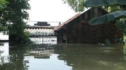 Hà Nội: Nước ngập ngấp nghé mái nhà, người dân sống cùng gà lợn