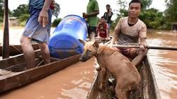 Ảnh: Dân vùng lũ Attapeu sống trong rừng, ba ngày không ăn uống