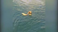 Video rắn kịch độc truy đuổi, quyết bò lên thuyền đầy trẻ em
