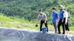 """Nuôi loài cá mõm nhọn trong """"ruộng bậc thang"""", bán 250.000 đồng/kg"""