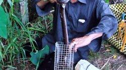 Clip: Dùng chuột đồng bẫy rắn hổ hành cực nhậy của nông dân miền Tây