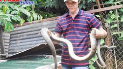 7 năm nuôi bầy rắn 500 con, bán 500-600 ngàn/kg, lời gấp 3