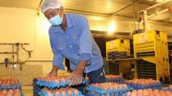 Giá trứng vịt chạy đồng tăng kỉ lục, người nuôi lãi đậm