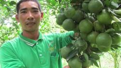 Đổi đời nhờ kỳ công trồng quýt đường trên đất phèn