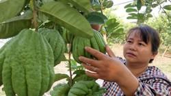 Hà Nội: Nhiều quận chậm trễ, thờ ơ hỗ trợ xây dựng nông thôn mới