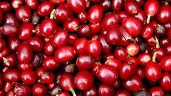 Giá nông sản hôm nay 2/8: Giá cà phê khó tăng mạnh, giá tiêu vẫn ảm đạm