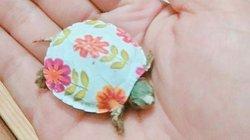 Bất chấp cảnh báo nguy hiểm, giới trẻ vẫn đổ xô mua rùa mini