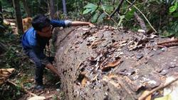 """Vụ phá rừng """"dân biết, kiểm lâm ngỡ ngàng"""": Giao công an điều tra"""