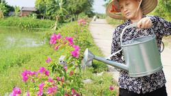 """Con đường hoa giấy ở làng này ai cũng khen bởi """"không đụng hàng"""""""