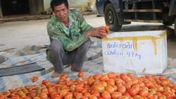 Làm giàu ở nông thôn: Chỉ trồng rau, cà thôi mà tôi lãi 400 triệu