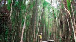 Cuối tuần rủ nhau về Long An dạo chơi rừng tràm Tân Lập xanh mướt