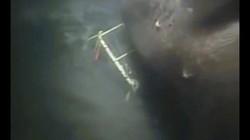 Cá mập quái vật thời tiền sử nặng gấp 5 xe buýt vẫn sống dưới biển sâu?