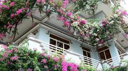 Quảng Ngãi: Ngẩn ngơ ngôi nhà 3 tầng ngập sắc hoa giấy Singapore