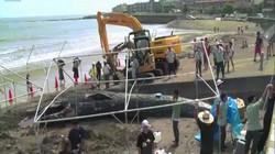 Video: Xác cá voi xanh quý hiếm lần đầu trôi dạt vào bờ biển Nhật Bản