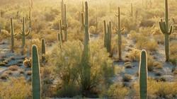Hành trình ba thập kỷ phủ xanh sa mạc lớn thứ 7 Trung Quốc
