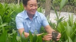 Nam Định: U60 ở nhà ươm cau giống, mỗi năm kiếm hàng trăm triệu