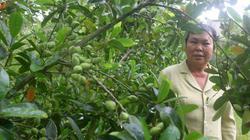 Làm giàu khác người: Trồng cà na Thái, cây thấp tè, trái quanh năm