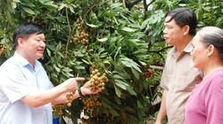 Giá nhãn 70.000 đ/kg bị phao tin 3.000 đ/kg, Hưng Yên phản pháo