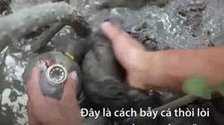 Dùng chai nhựa bẫy cá thòi lòi trong rừng ngập mặn Cần Giờ