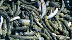 Giá cá kèo tăng mạnh, bán mỗi con thu về 1.000 - 3.000 đồng
