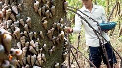 Ra bãi bồi này ở Cà Mau, nhặt vội cũng được la liệt đặc sản biển
