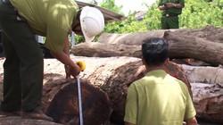 """Vụ trùm gỗ lậu Phượng """"râu"""":Chi cục trưởng kiểm lâm giao nộp 8m3 gỗ"""