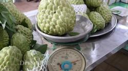 Cận cảnh những trái na khủng nặng trên 1kg có giá 150.000 đồng/quả