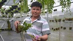 Lan rừng giữa phố, bán 10cm giả hạc Lâm Đồng giá 1 chỉ vàng