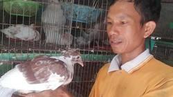 Ninh Bình: Bỏ phố về quê nuôi chim hiền lành, lãi 10 triệu/tháng