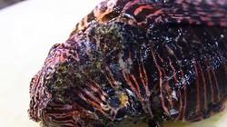 Đến nhà hàng ở Jamaica ăn thử món cá kịch độc có hương vị vô cùng hấp dẫn