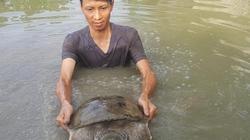 Nam Định: Nuôi ba ba khổng lồ, mỗi năm kiếm hơn nửa tỷ đồng