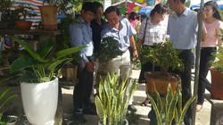 Đà Nẵng: Dạy trồng hoa, nấm miễn phí tại phiên chợ hoa, cây cảnh