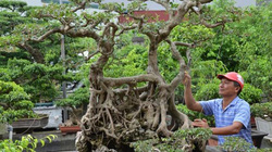Chuyện truyền kỳ về gã đồ tể có vườn cây cảnh nhất nhì miền Bắc