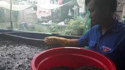 Quảng Nam: Lót bạt trên cạn nuôi cá lóc dày đặc, 15m2 thu 3 tấn