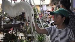 Quảng Ninh: Chợ bán gà cảnh, thiên nga đen và vô số đồ cũ rích