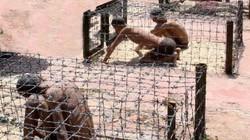 """Nhà tù Phú Quốc – """"Địa ngục trần gian"""""""