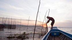 An Giang: Lũ về đặt dớn bắt cá linh, cá rô đồng kiếm 400 ngàn/ngày