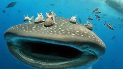 """""""Hết hồn"""" trước khoảnh khắc du khách suýt bị cá mập voi nuốt chửng"""