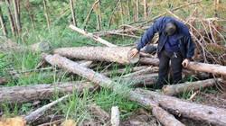 Vụ phá rừng cách trụ sở UBND xã 1km: Đình chỉ công tác 2 cán bộ