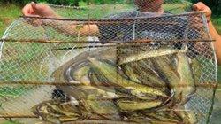 Mùa nước nổi, 2 đứa trẻ tranh thủ đặt lọp bắt cá kiếm ra tiền