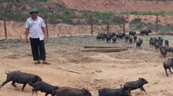 Nuôi lợn rừng thả rông trong thung lũng, rủng rỉnh tiền tiêu