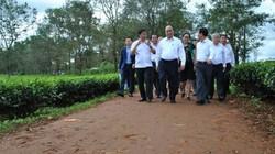 Thủ tướng thăm vườn chè cổ thụ trên 100 tuổi ở Gia Lai