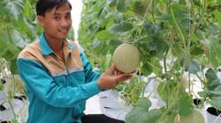 9X thôi việc ở Viettel về quê theo nghề trồng dưa lưới